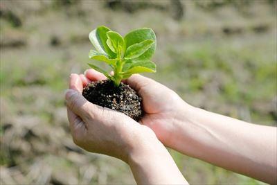 農作物や草花が喜ぶ理想的な土壌って?