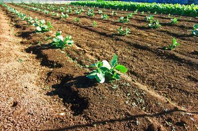 より良い農作物の成長に効果が期待できる有機物と農業の関係